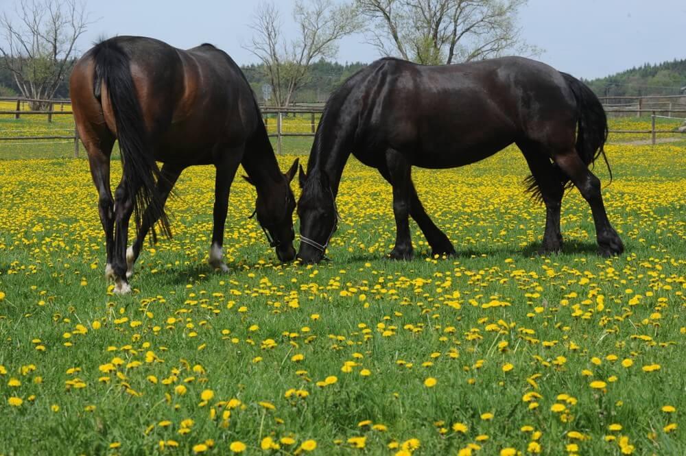 Horses in the Michael Farma venue