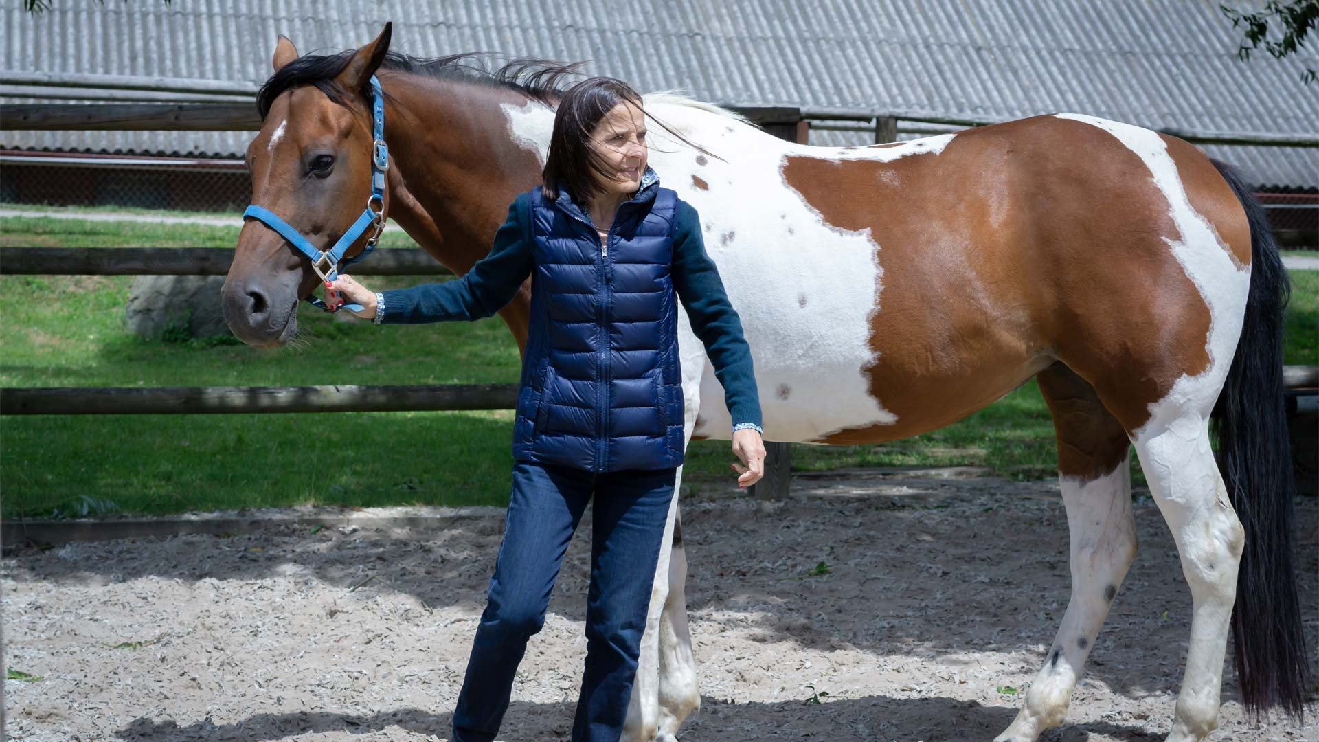 Contact Coaching with Horses